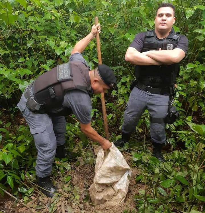 PM de Maués encontra maconha enterrada