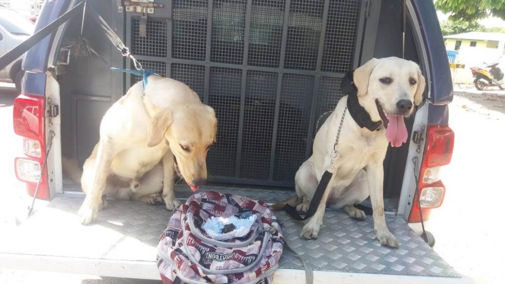 Champ e Ayra encontraram mochila abandonada com pequena porção de maconha. Foto: Divulgação 11º BPM