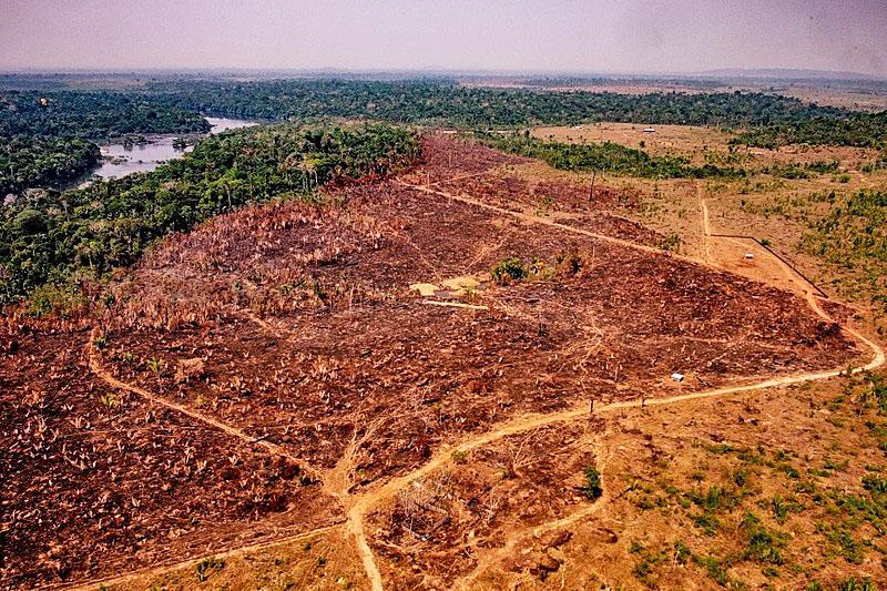 Nenhuma multinacional foi ou será multada pelo desmatamento, mas são elas que financiam todo o processo - Mayke Toscano/Comunicação Estado Mato Grosso/AFP
