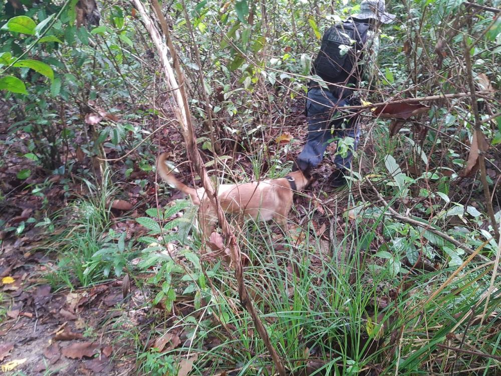 Polícia Militar contou com ajuda do canil nas buscas ao menor.